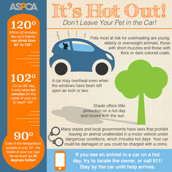 Pets in hot cars infographic