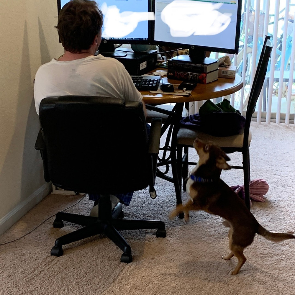 Man working from home with his dog trying to play