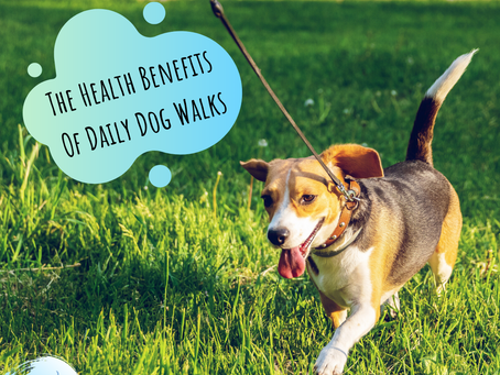 The Health Benefits Of Daily Dog Walks
