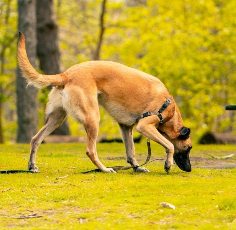 Dog sniffing the ground at a park