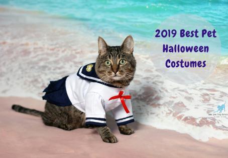 2019 Best Pet Halloween Costumes