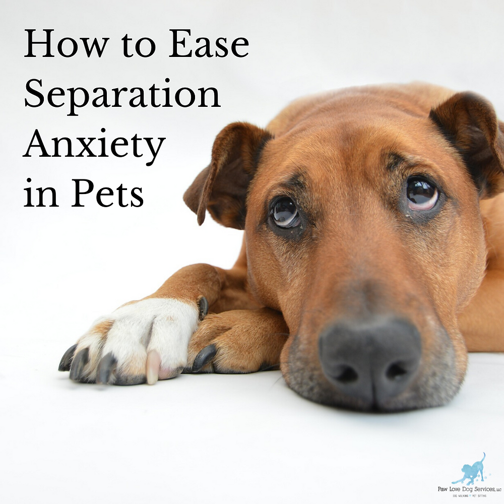 "Dog with text ""how to ease separation anxiety in pets"""