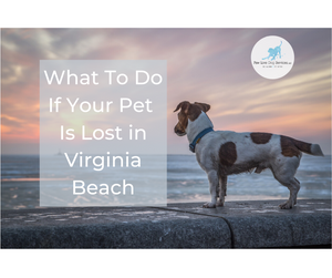 What to do if your pet is lost in Virginia Beach