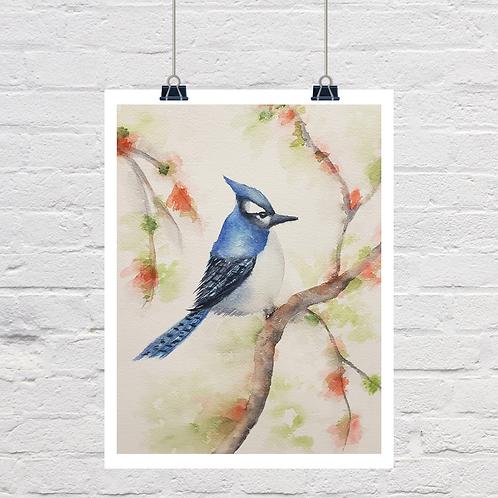 Mr Blue Bird