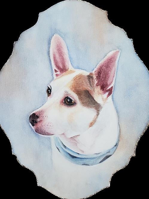 Commissioned Pet Portraits