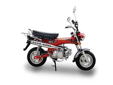 Ice Bear Champion - 125cc