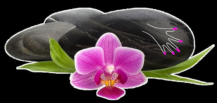 Baniere massages lingons trans.png