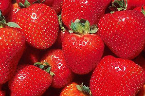 strawberry concentrate producer