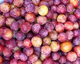 plum puree fragmented
