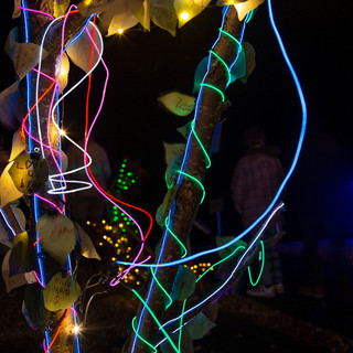Tree of Light by Daniella Clynes