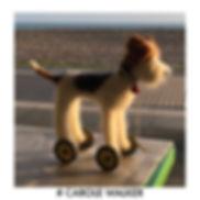 #carole walker image.jpg