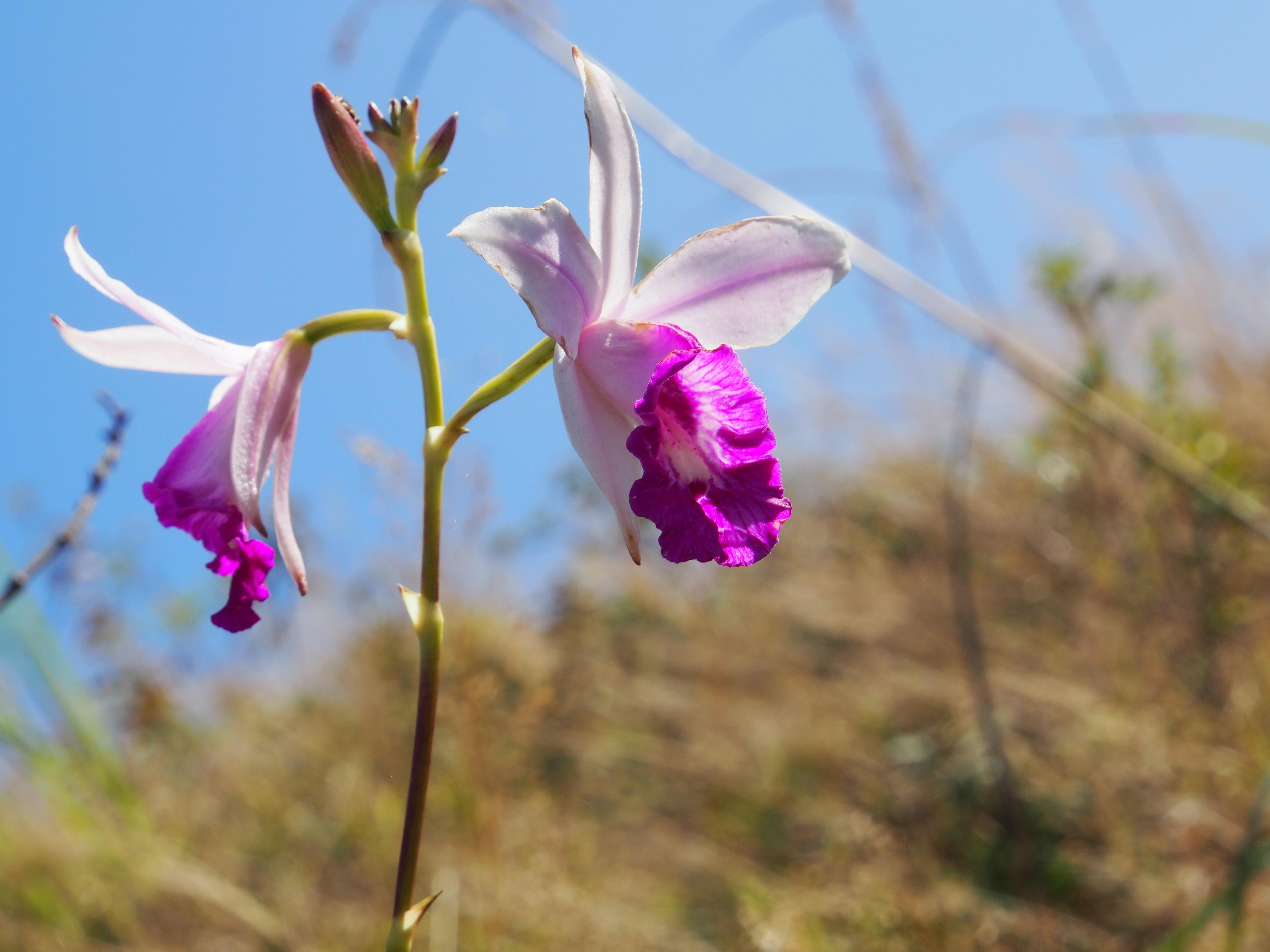 Amazing Flora