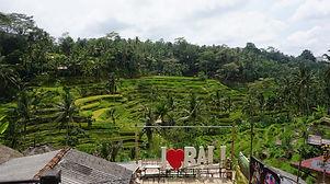 Bali_ricefield_2_DSC02131 copy.jpg