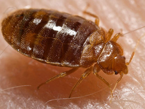 Someone Released Bedbugs in a Pennsylvania Walmart