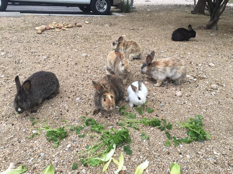 feral bunnies