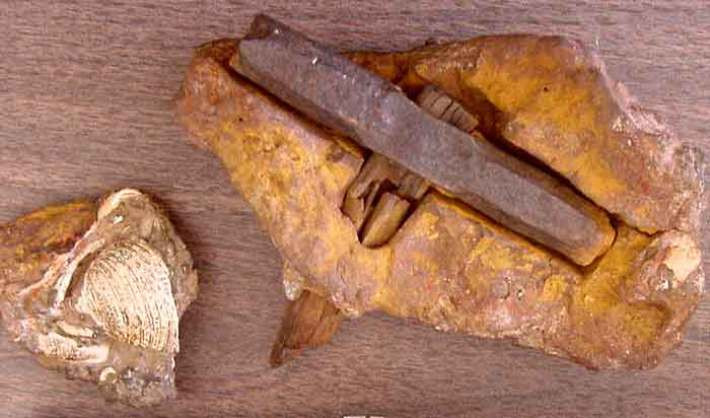 Everything We Have Been Taught About Human Origins is a Lie