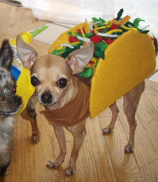 Best Halloween Costumes For Dogs