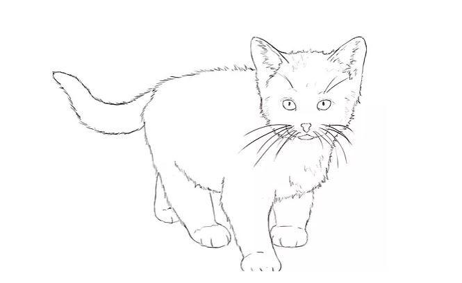 The Kitty Cat Dick Prank