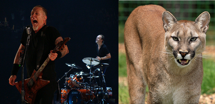 Canadian Hiker Used Metallica Song to Scare Off Cougar