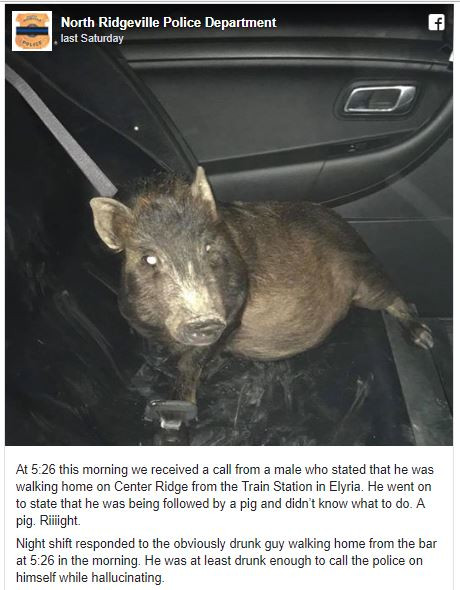 man who called 911 about a pig