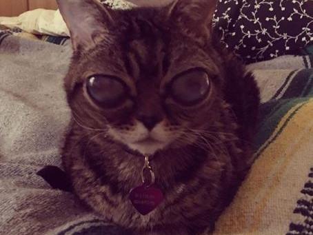 Matilda, the Alien-Eyed Cat