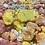 Thumbnail: Fizzy Bath Dust Pack