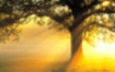 arbredelumiere_1.jpg