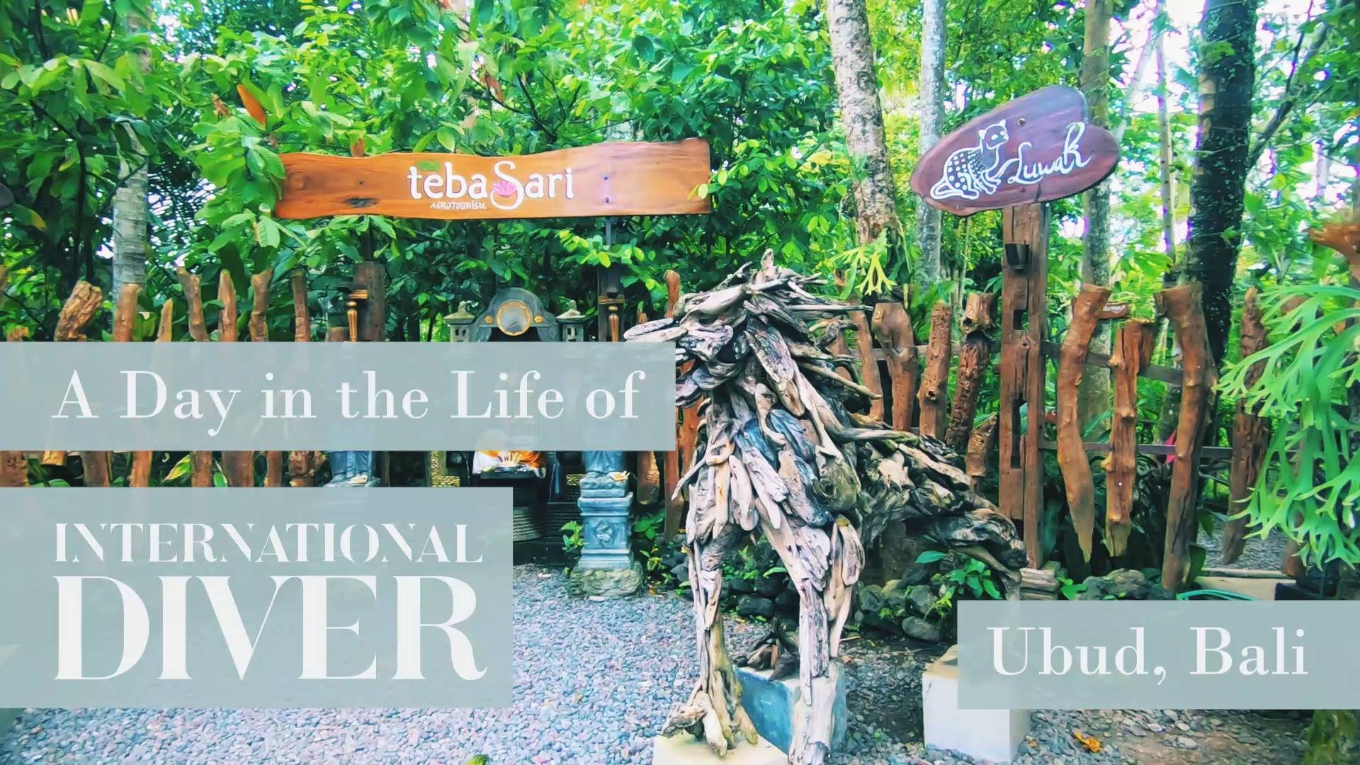 A DAY IN THE LIFE OF INTERNATIONAL DIVER - UBUD, BALI