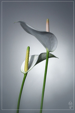 « FLOWERS »