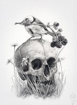 « TRISTIS » Dark Bird