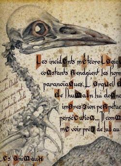 « BIRD »