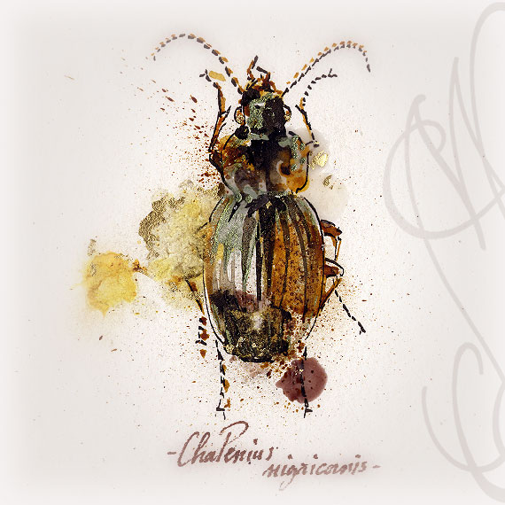 « INSECTE #6 »