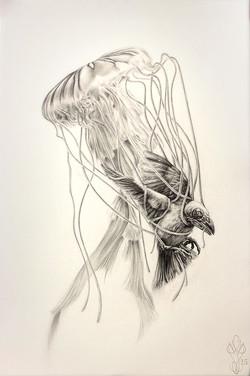 « DEPRESSIO » Dark Bird