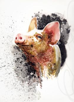 « PIG »