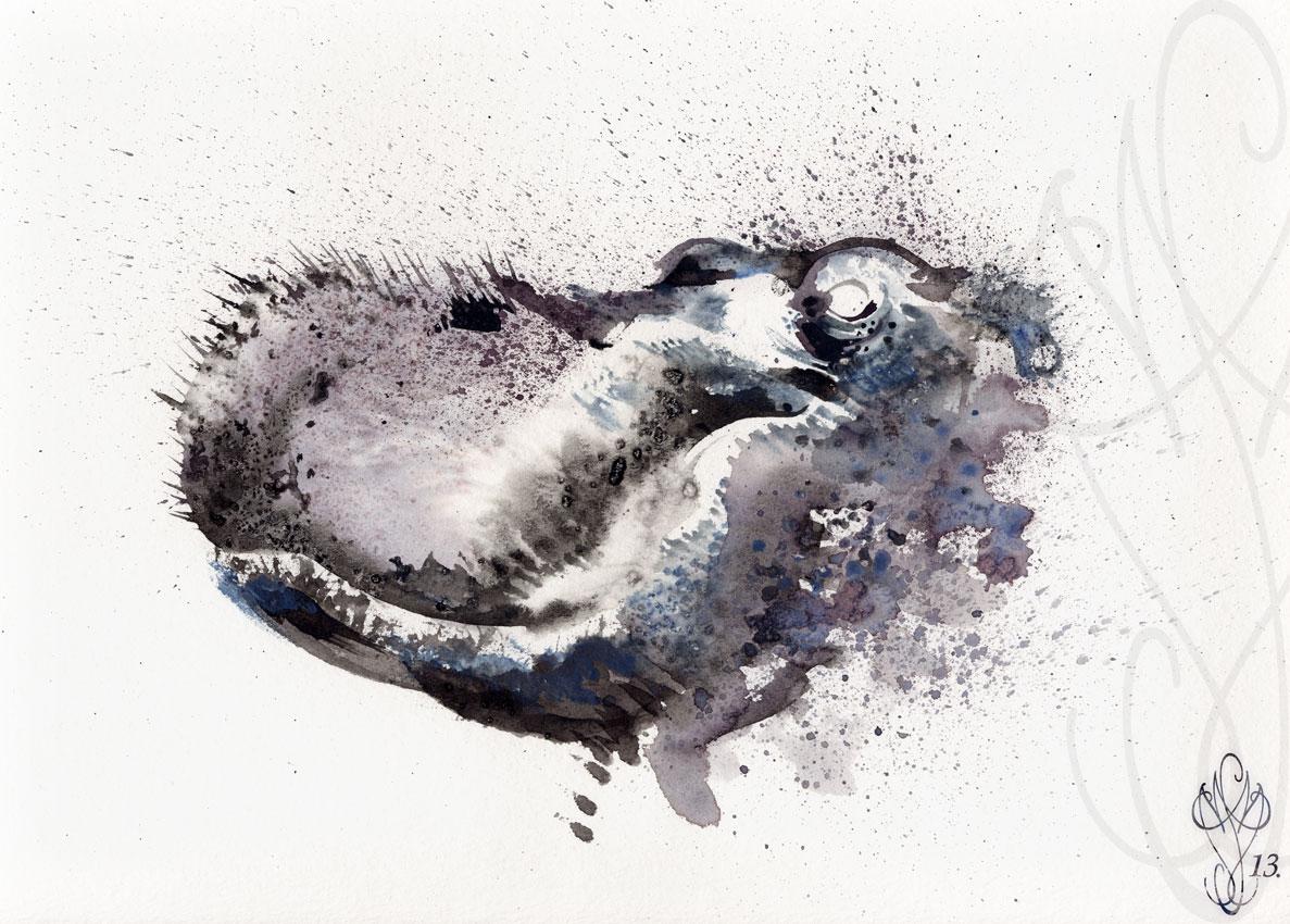 « HIPPO »