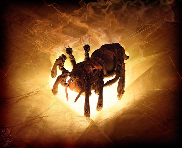« SPIDER »