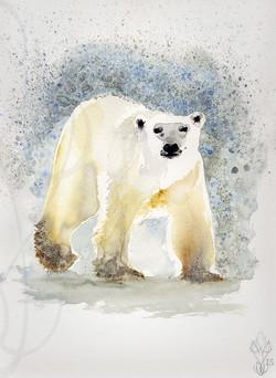 « POLAR BEAR »