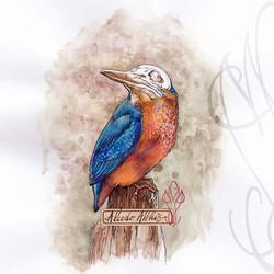 """Alcedo Atthis"" (Kingfisher - Martin-pêcheur)"