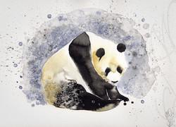 « PANDA »