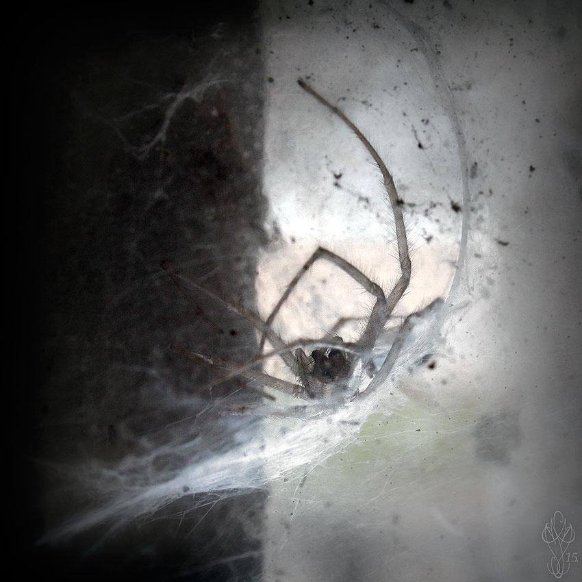 « SPIDER #2 »