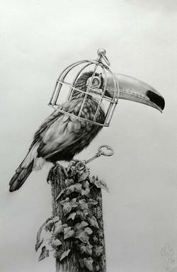 « DISCRETIO » Dark Bird