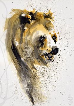 « BEAR »
