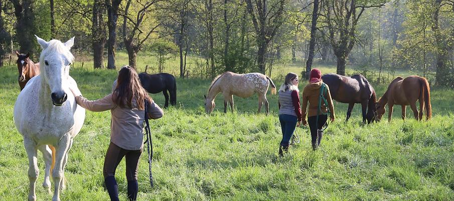 chevaux pré.png