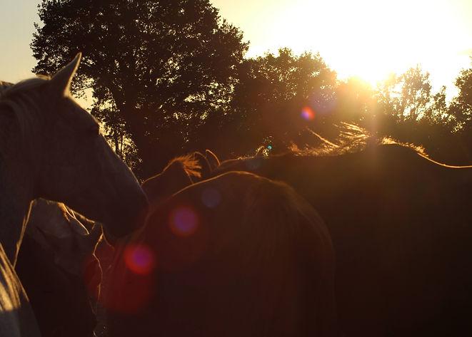 chevaux-romantique.JPG