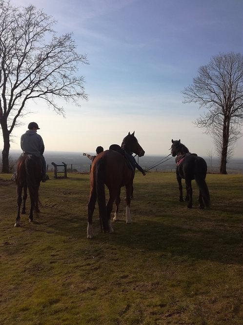Bon Cadeau Balade à cheval Montaigu