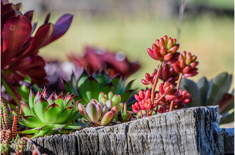 Colorful Succulents-5.jpg