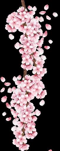 sakuras_flores_fondo.png