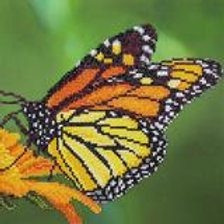 Diamond Art - Papillon Monarch