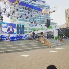 부산해운대모래축제.jpg