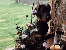 Alojamientos pet friendly: llévalos contigo! Tu casa rural que admite a tus mascotas en Galicia